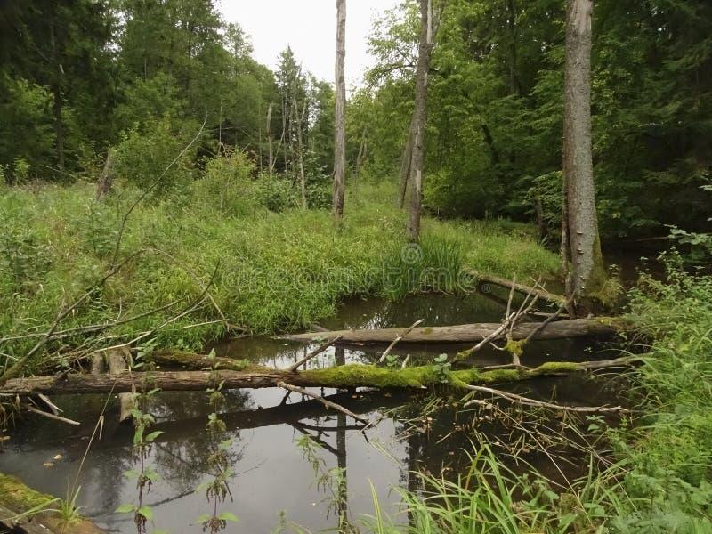 Старое озеро в лесе стоковая фотография