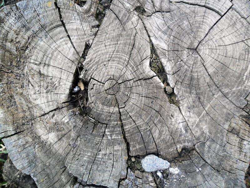 Старое отрезка дерево вниз стоковое изображение rf