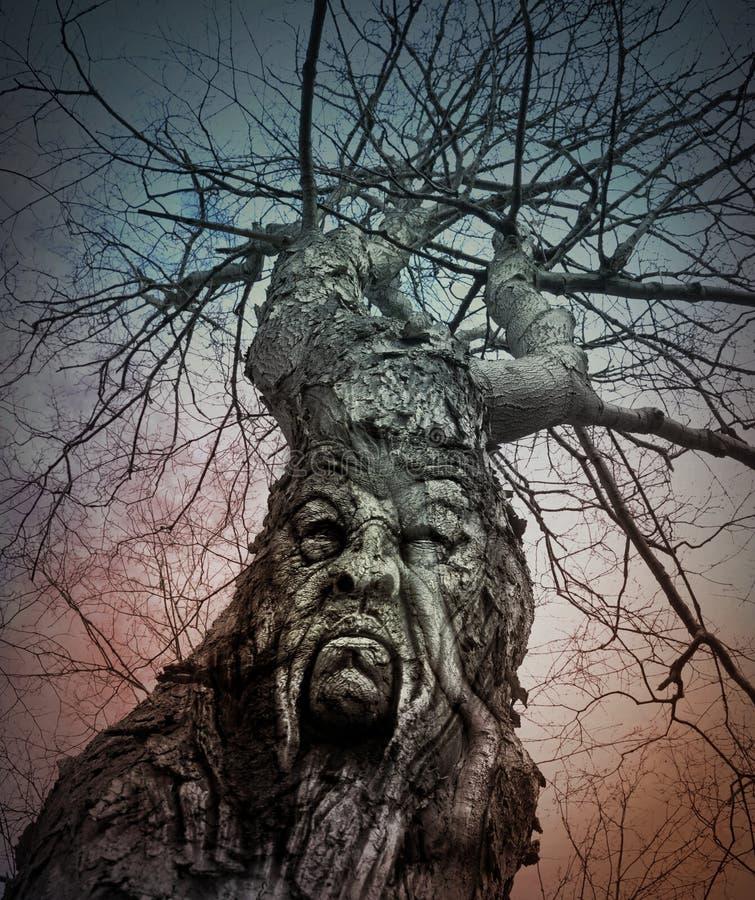 Старое страшное дерево с сердитой стороной в древесинах стоковое фото rf