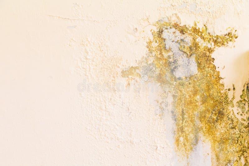 Старой цемент конспекта стены цвета треснутый текстурой для предпосылки с космосом экземпляра добавляет текст стоковое изображение rf