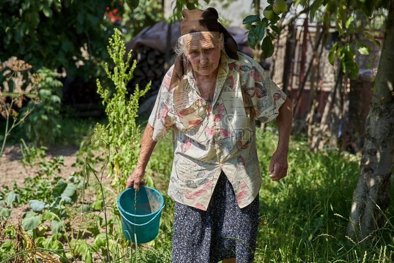 Старшая женщина в огороде стоковое фото