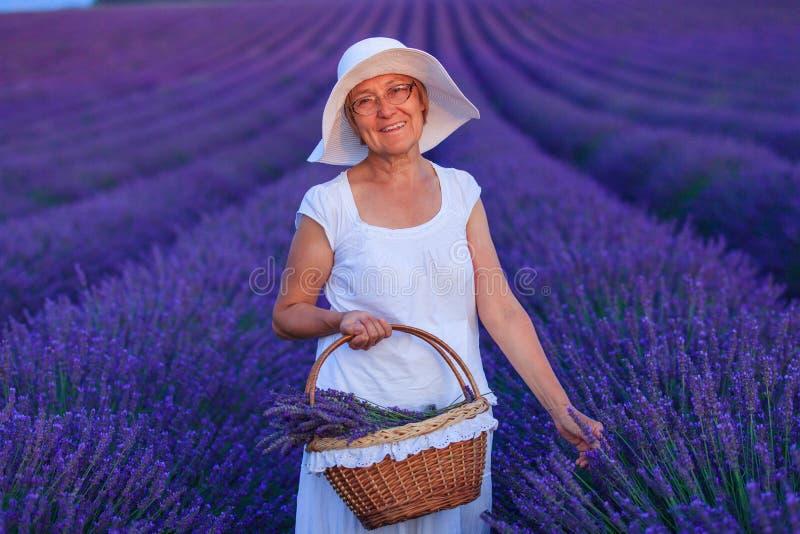Старшая женщина в полях lavander стоковое изображение