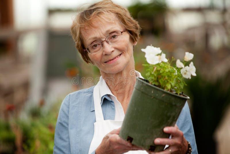Старшая женщина держа в горшке завод стоковые фото