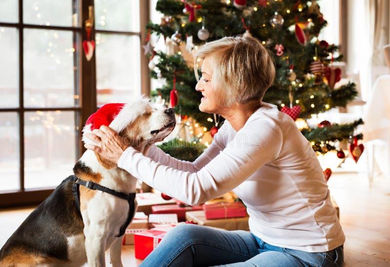 Старшая женщина с ее собакой на рождественской елке стоковое изображение rf