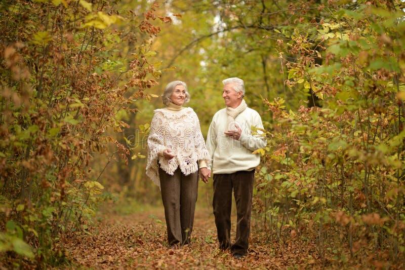 Старшие пары идя на путь леса стоковая фотография rf