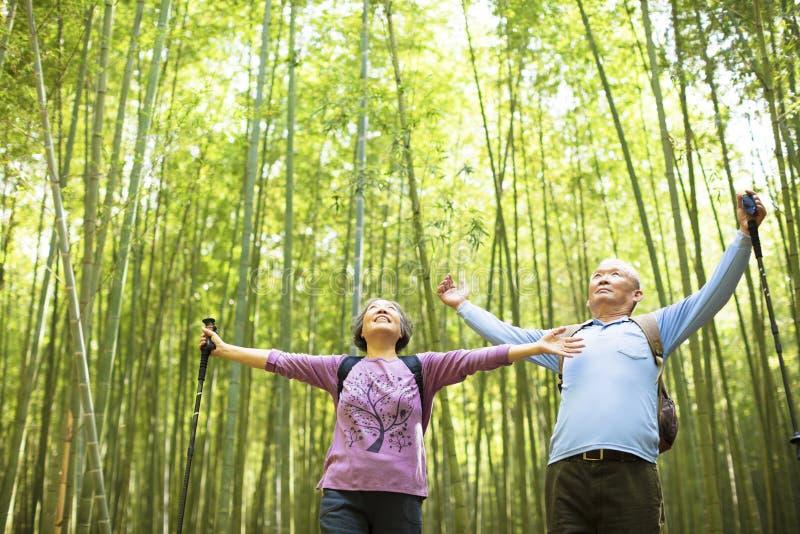 Старшие пары пешие и ослабляя в зеленом бамбуке стоковые изображения