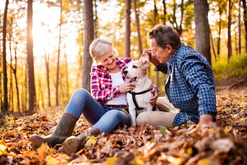 Старшие пары с собакой на прогулке в лесе осени стоковое изображение rf