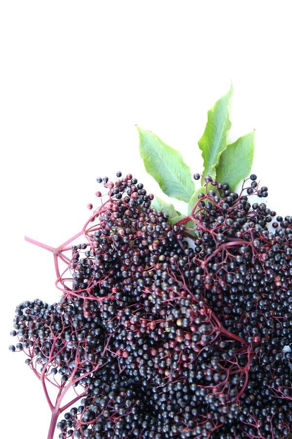 Download Старшие ягоды стоковое изображение. изображение насчитывающей ягод - 40583293