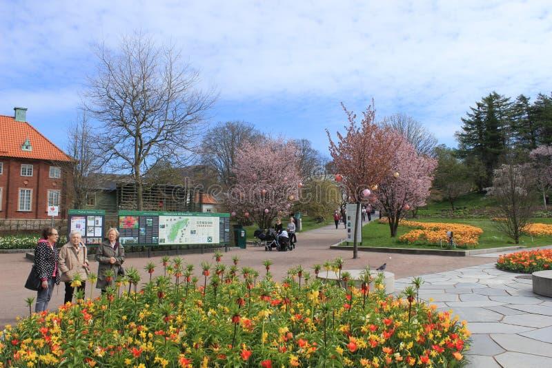 Старшии, хобби, цветки, весна, солнечный день, сад Гётеборга ботанический, Швеция стоковое изображение