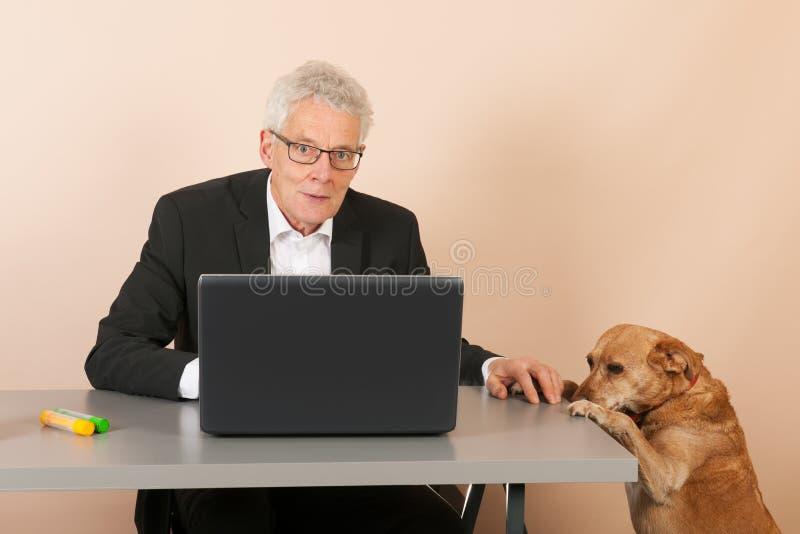 Старший бизнесмен с собакой стоковое фото