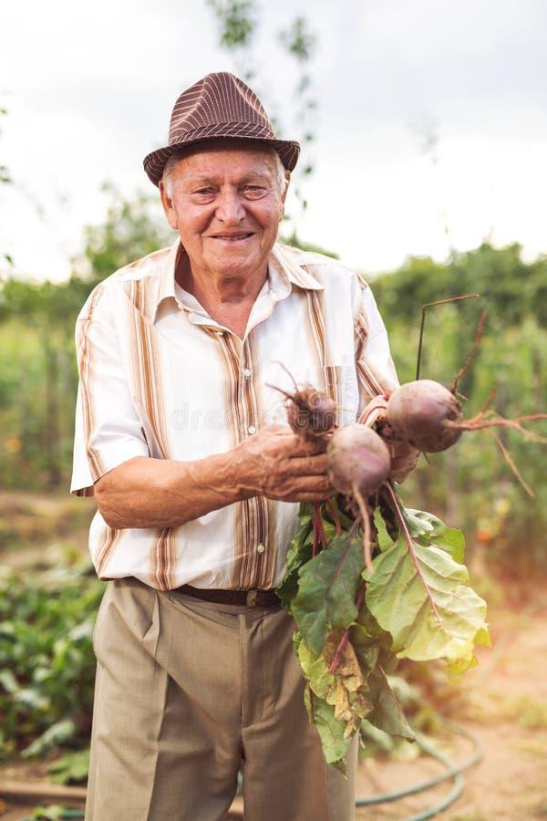Старший держит пук свеклы стоковые фотографии rf