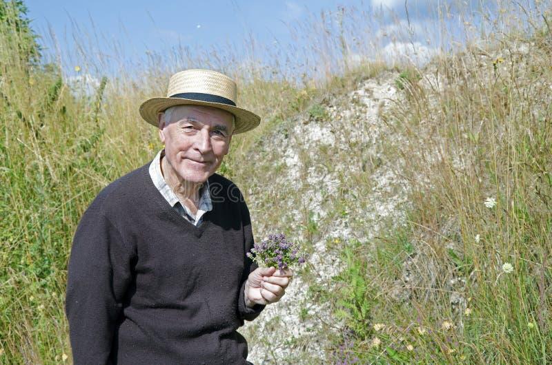 Старший собирая травы стоковая фотография rf