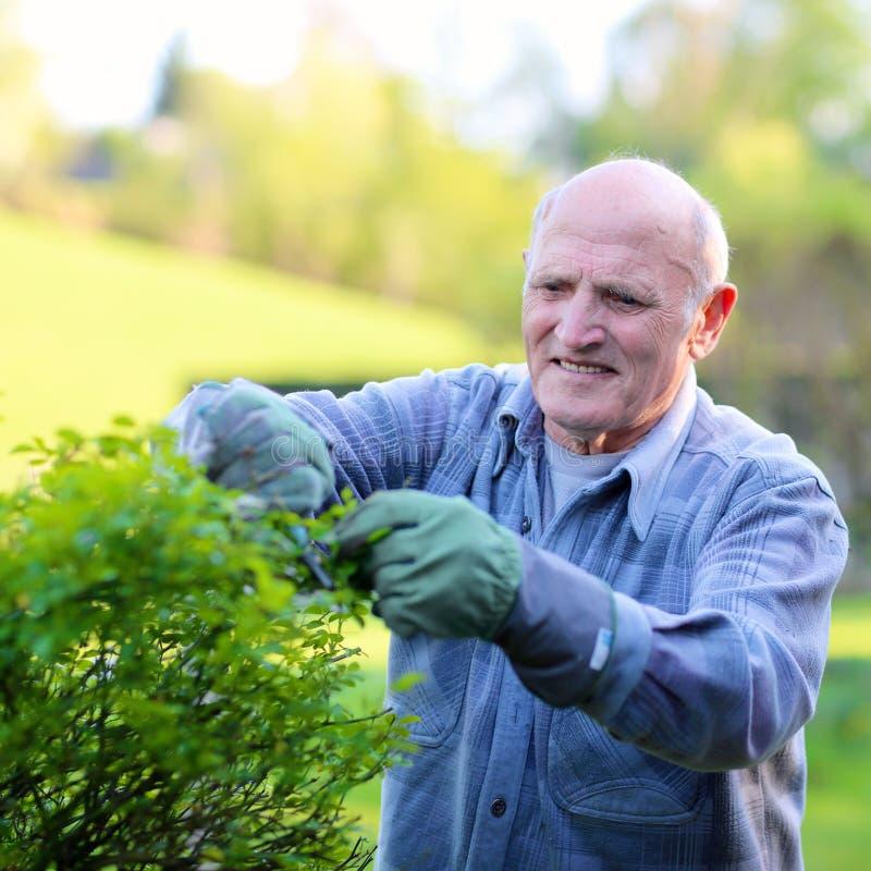 Старший человек работая в саде стоковая фотография rf