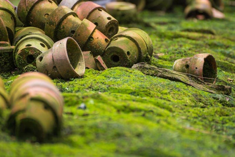 Старые баки дерева на том основании в саде стоковое изображение rf