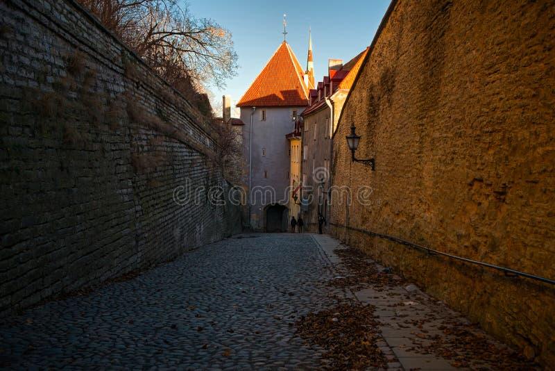 старые башни tallinn эстония стоковое фото rf