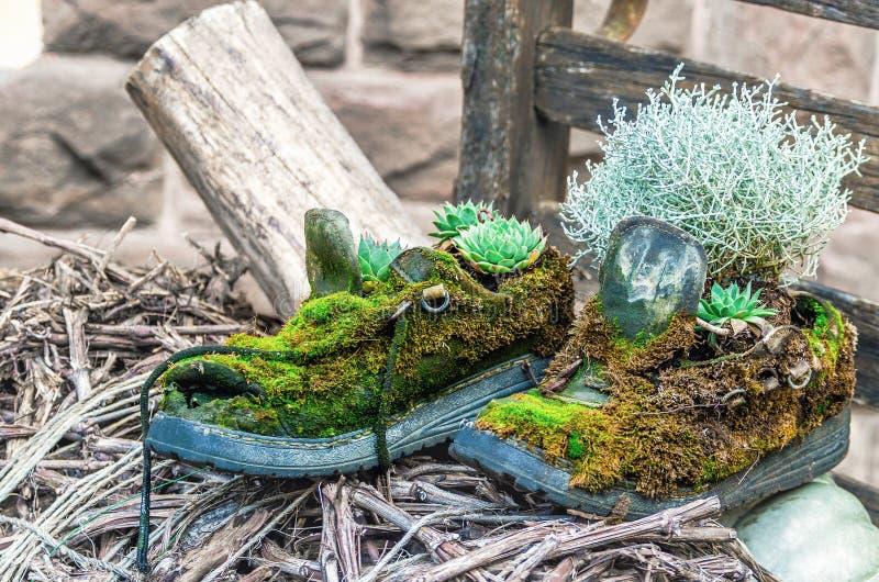 Старые ботинки предусматриванные в зеленом мхе сделанном под цветочными горшками стоковое фото rf