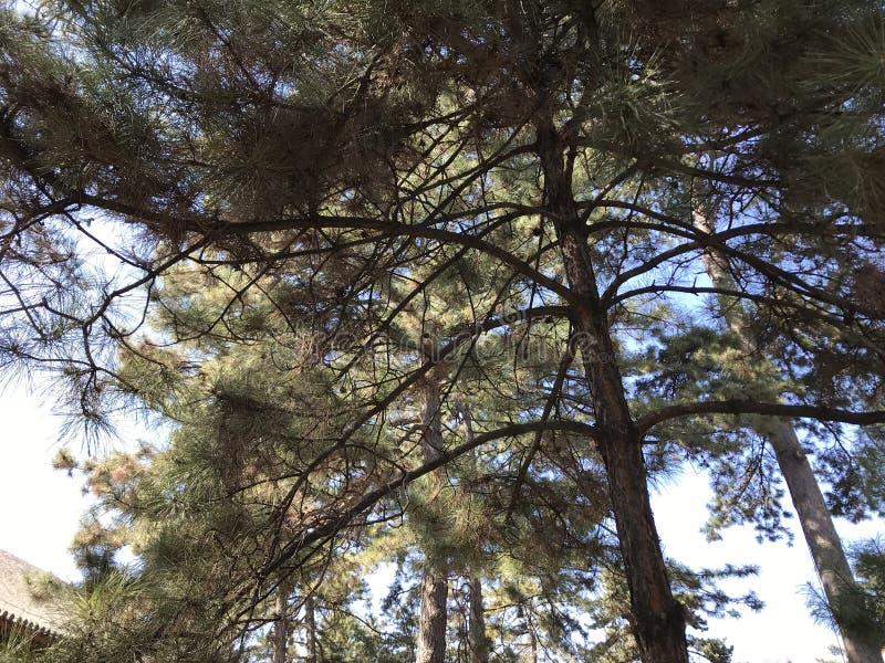 Старые деревья весной стоковые изображения