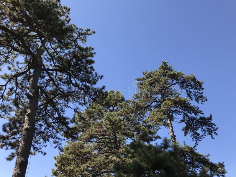 Старые деревья весной стоковое изображение