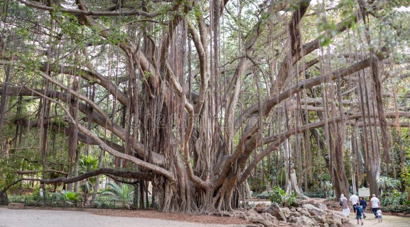 Старые деревья в ботаническом саде Hamma в Алжире Было установлено в 1832 и теперь все еще рассмотрено одно из importan стоковое фото