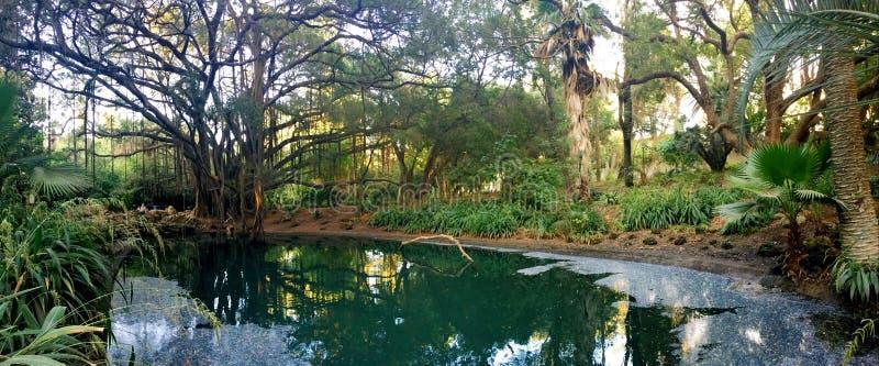 Старые деревья в ботаническом саде Hamma в Алжире Было установлено в 1832 и теперь все еще рассмотрено одно из importan стоковая фотография