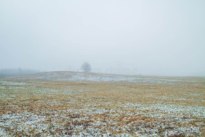 Старые деревья в луге смог Зима, Латвия 2011 стоковое изображение rf