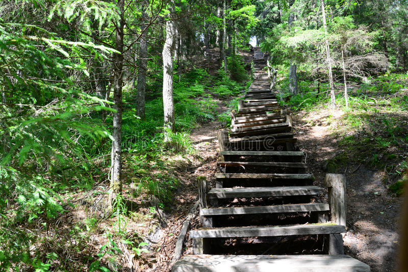 Старые деревянные лестницы в лесе Sigulda стоковое изображение rf