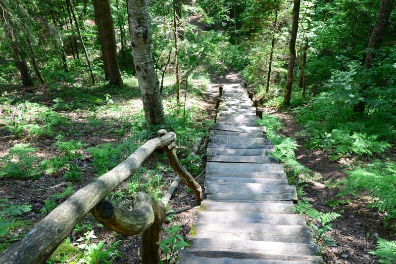 Старые деревянные лестницы в лесе Sigulda стоковые изображения rf