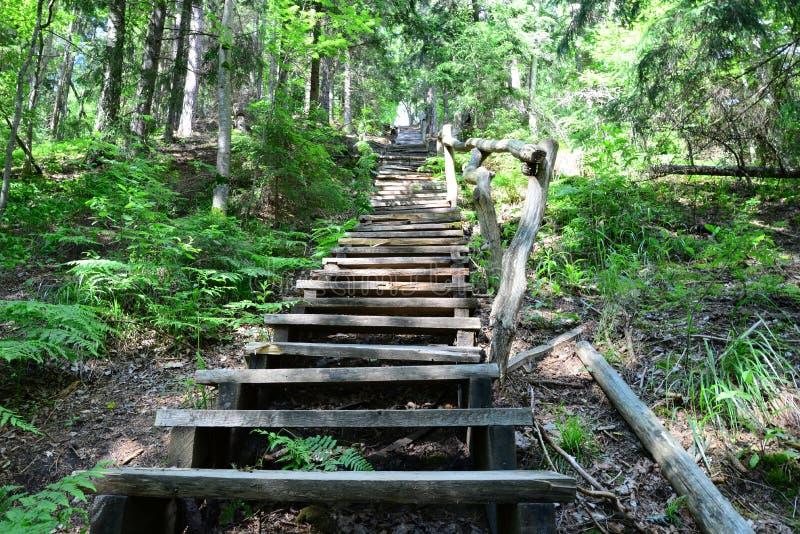 Старые деревянные лестницы в лесе Sigulda стоковое изображение