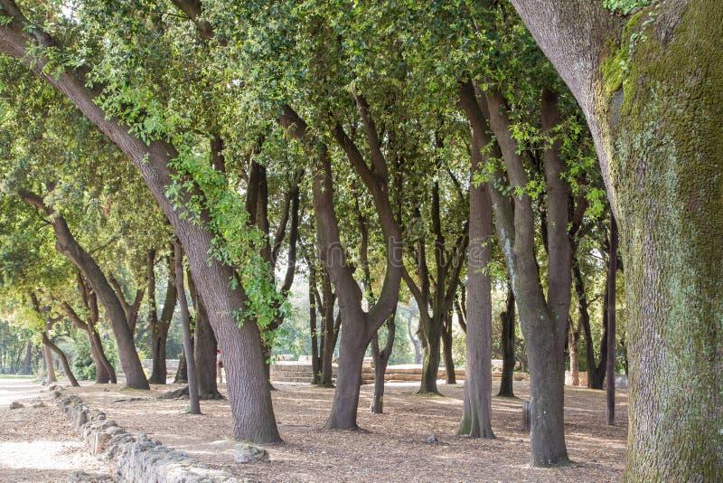 Download Старые изогнутые деревья вне Помпеи Стоковое Фото - изображение насчитывающей разрушенный, памятник: 37928624