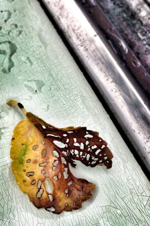 Старые лист, старая краска стоковые изображения