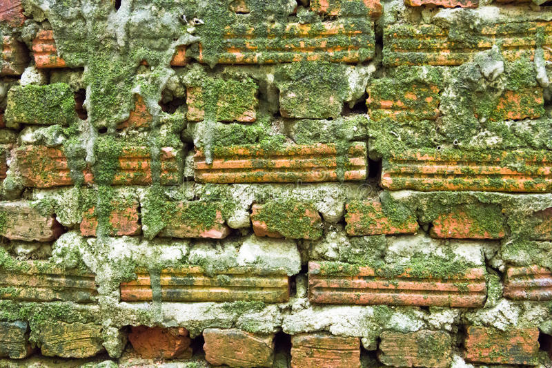 Старые кирпичи с зеленой предпосылкой мха стоковые изображения rf
