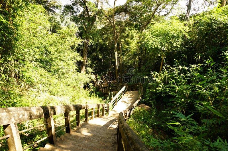 Старые лестницы на среди лесов стоковые изображения rf