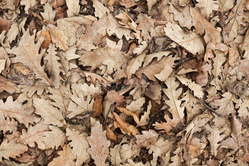 Старые листья Брауна стоковые изображения rf