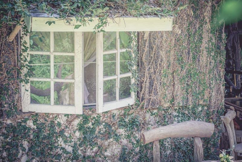 Старые окна при creepers и лозы, красиво покрытые natu стоковая фотография rf