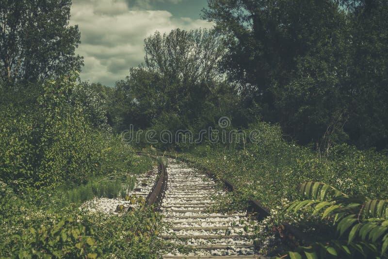 Старые, покинутые железнодорожные пути, перерастанные с природой стоковая фотография rf