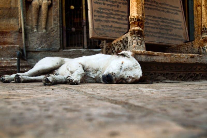 Старые сны бездомной собаки стоковые изображения rf