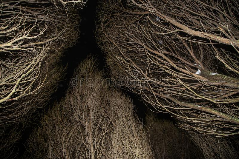 Старые сухие деревья в мистическом лесе в ноче стоковая фотография rf