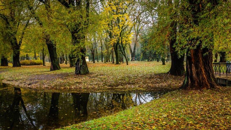 старые толстые деревья, упаденная листва на банках потока в красивом общественном парке города осени стоковая фотография rf