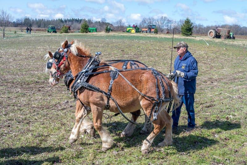 Старые тракторы и команда работая лошадей в тренировке стоковое фото