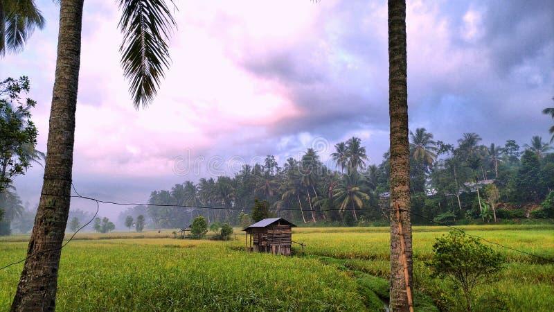 Старые хижины и желтые поля риса стоковые изображения