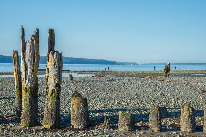 Старые штабелевки на каменистом пляже стоковое фото rf