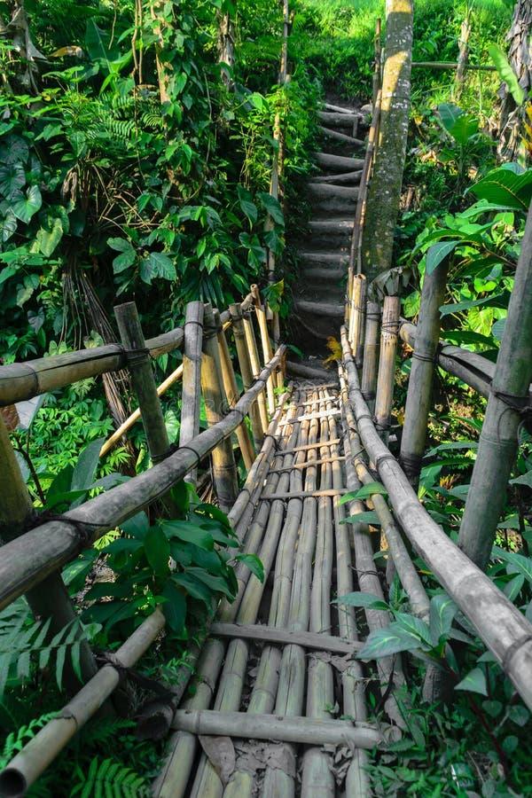 Старый бамбуковый мост в середине тропического леса в острове Бали, Индонезии стоковое фото rf