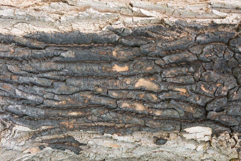 Старый большой крупный план коры дуба стоковые изображения rf