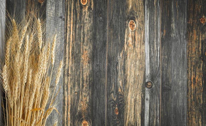 Старый винтажный деревянный с растительным фоном ячменя, используется для декоративного и органического содержания стоковое фото rf