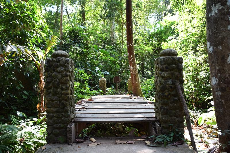 Старый деревянный мост и каменный штендер с предпосылкой леса стоковое изображение rf