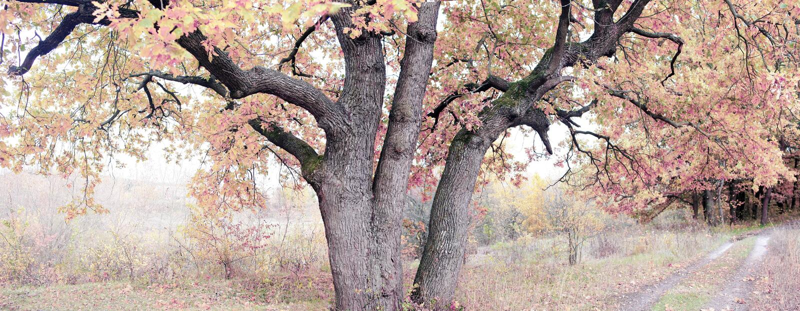 Старый дуб осеннего леса стоковое изображение