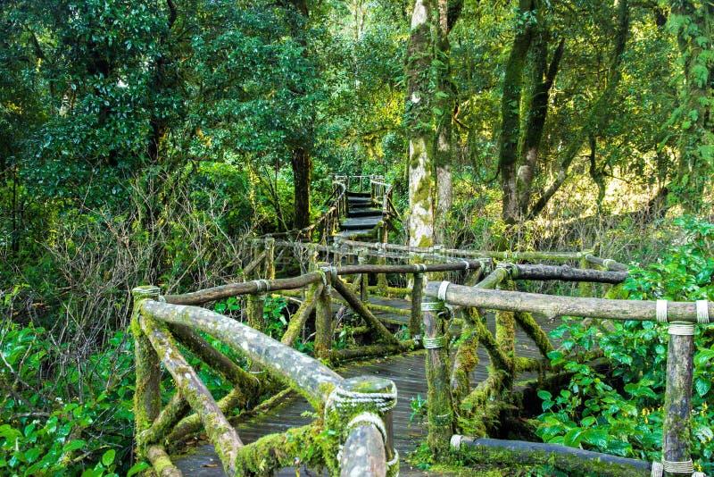 Старый деревянный пешеходный мост стоковое фото rf