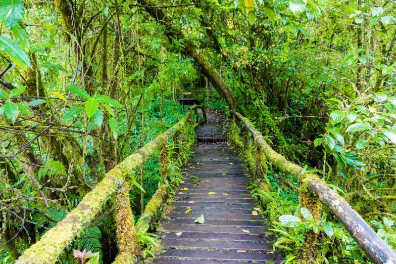 Старый деревянный пешеходный мост стоковые фотографии rf