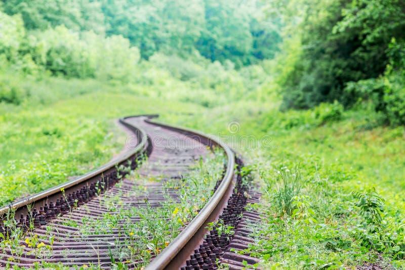 Старый железнодорожный путь идет зигзаг среди плотной растительности в плотных передних частях стоковое изображение rf