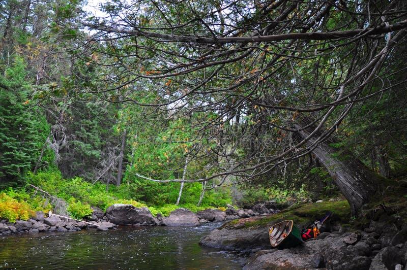 Старый кедр Portage, меньшее река Missinaibi, Онтарио стоковые изображения rf